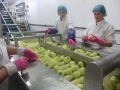 benburb bramleys factory